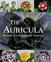 The Auricula: History, Cultivation and Varieties