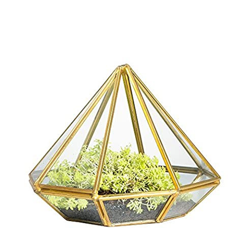 Monder Open Diamond Glass Geometric Terrarium Indoor Display Succulent Fern Moss Tabletop DIY Planter Air Planter Box without Door Gold