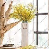 Exótico de semillas de pasto de San Valentín planta de los bonsais de la herencia, la germinación del 95% Tasa de colores semilla de flor Living Room Decor 100 Pcs 13