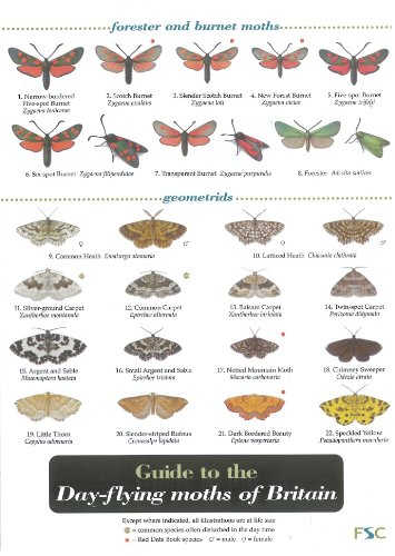 wildlife-world-day-flying-moths-of-britain-field-guide