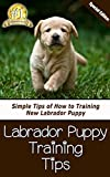 Labrador Puppy Training Tips: Simple Tips of How to Training New Labrador Puppy