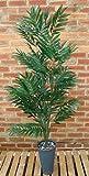 5 ft Phoenix Palm - 612 Leaves - Best Reviews Guide