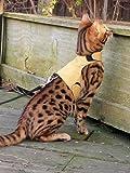 Mynwood Cat Jacke /Geschirre Karamell Erwachsene Katze ausbruchsicher