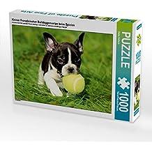 Kleiner Französischer Bulldoggenwelpe beim Spielen 1000 Teile Puzzle quer: Hundewelpen (CALVENDO Tiere)