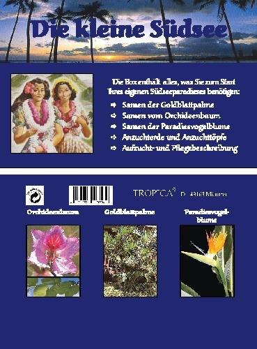 Mini-Gewächshaus - Die kleine Südsee - mit Samen der Goldblattpalme, Orchideenbaum und Strelitzie