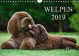 Welpen 2019 (Wandkalender 2019 DIN A4 quer): 13 bezaubernde Welpenfotos begleiten uns durch das Jahr 2014 (Monatskalender, 14 Seiten ) (CALVENDO Tiere)