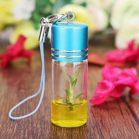 Bluelover Regalo de amante de escritorio vidrio botella Mini planta mascota boda cumpleaños