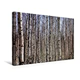 Premium Textil-Leinwand 45 cm x 30 cm quer, Finnland Birkenwald | Wandbild, Bild auf Keilrahmen, Fertigbild auf echter Leinwand, Leinwanddruck (CALVENDO Orte)