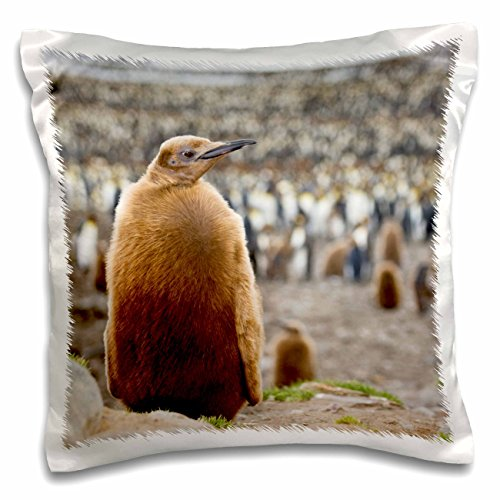 3dRose South Georgia, St. Andrews Bay. King penguin-an02 bja0031-janyes Gallery-Pillow Fall, 16 von 40,6 cm (PC 74215 _ 1)