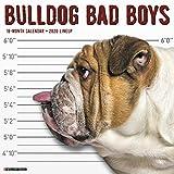 Bulldog Bad Boys 2020 Calendar