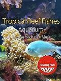 Tropical Reef Fishes Aquarium & Relaxing Meditation Music