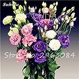 Eustoma Samen Bonsai Mixed Perennial Blumensamen für Heim & Garten Eustoma Grandiflorum Lisianthus Samen-100 PC heiße Verkaufs-14