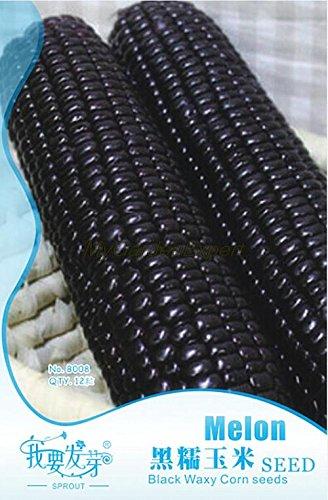 Heiße verkauf 12 schwarz wächserne Maissamen, Maissamen, Gemüsesamen Gartenpflanze
