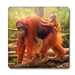 Orangutan Animal Magnet