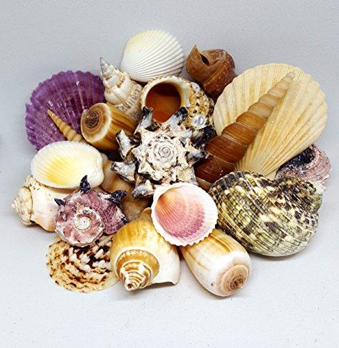 Luckiests Conch Shell delle Stelle Marine Torta Muffa della Torta della Muffa Sea Shell del Silicone Marine Fondente Gelatina Muffa di Cottura