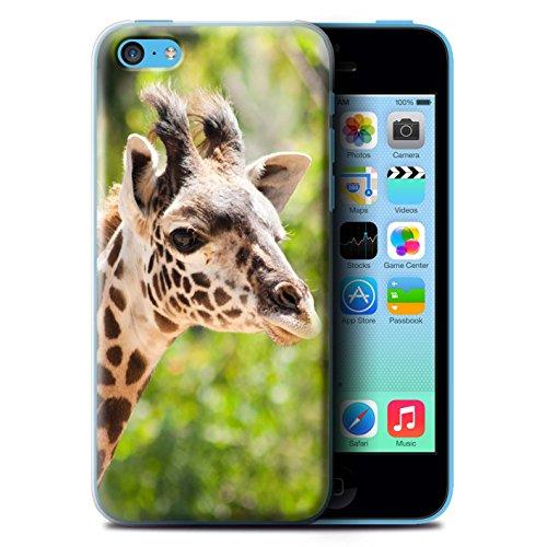 Coque de Stuff4 / Coque pour Apple iPhone 5C / Panda Design / Animaux Sauvages Collection Girafe