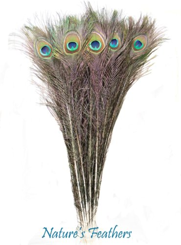 Nature's Feathers 25 Real Natural Peacock Feathers 20-25 Inches by NATURE'S FEATHERS