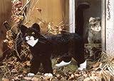 Kösener 3960 - Katze Mautz, stehend