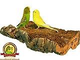 """'corcho Tabla de asiento """"Extra Grande para pájaros + Premium pájaro de asiento Tabla de corcho para Onda loros, Ninfa loros, loros y Co., 100% BIO y saludable akku-knabber de juguete, Pájaros aman corcho de asiento Tablas, sin herramientas en cualquier jaula fácil de fijar, fácil de limpiar, corcho natural cálida para pájaro pies, es bueno para sujeción y pico de cuidado"""