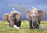 Elefanten 2019: Liebenswerte Dickhäuter