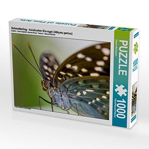Schmetterling - Asiatischer Eisvogel (Athyma perius) 1000 Teile Puzzle quer: Filigrane Flugkünstler und zarte Geschöpfe (CALVENDO Tiere)