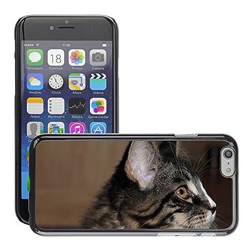 GoGoMobile Hard plastica indietro Case Custodie Cover pelle protettiva Per // M00124374 Cat animal jeune chat espiègle Curieux // Apple iPhone 6 PLUS 5.5
