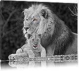 liebevolle Löwe kuschelt mit kleinem Jungtier schwarz/weiß auf Leinwand, XXL riesige Bilder fertig gerahmt mit Keilrahmen, Kunstdruck auf Wandbild mit Rahmen, günstiger als Gemälde oder Ölbild, kein Poster oder Plakat