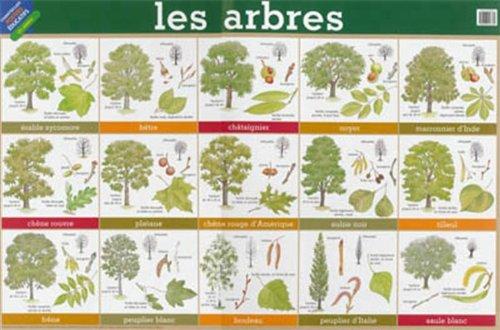 poster-36-les-arbres