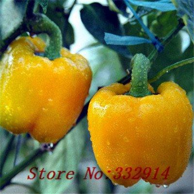 Vente Big Jim Chili Pepper 200 graines - 12 Pouces Premium Semences Potagères de qualité à haut rendement