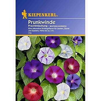 Ipomoea purpurea Prunkwinde Prachtmischung