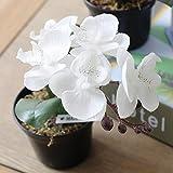 GSYLOL 1 Stück Seide Tuch Künstliche Blumen Schmetterling Orchidee Mit Mini Set Topf Simulation Gefälschte Bonsai Home Party Dekorationen, weiß