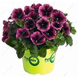 50 PC Petunia Blumensamen Petunien Garten Bonsai Balkon Petunia Hybrida Blumen-Samen Zierpflanzen für den Hausgarten 7