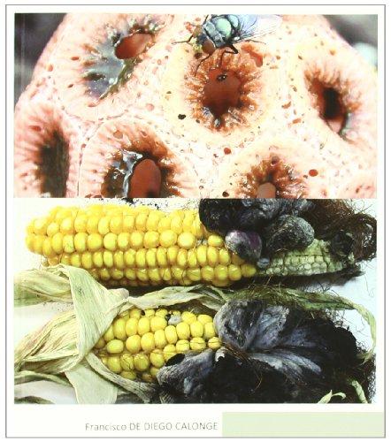 Hongos medicinales (Botanica (mundi Prensa))