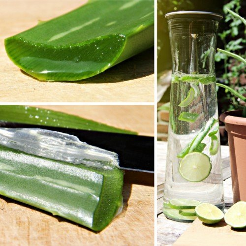 BIO- Aloe vera 'Sweet' - Bio-pflanze