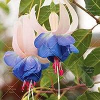 Amazon Fr Lanternes Chinoises Fleurs Graines Jardin