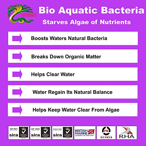 bio bacteria review Biology resources class schedule: what  population review graphing activity  bacteria and viruses - (some resources use the pdf format which requires free.