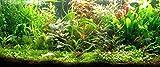 Générique Lot of 60 Plants Aquarium 9 Varieties with Roots and Stems +2 cladophora