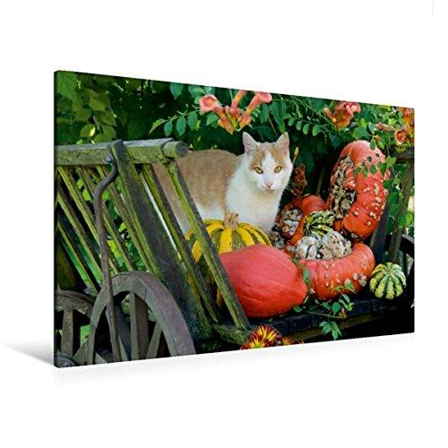 Premium Textil-Leinwand 120 cm x 80 cm quer, Katze in einem Leiterwagen mit Kürbissen   Wandbild, Bild auf Keilrahmen, Fertigbild auf echter Leinwand, ... mit farbenfrohen Kürbissen (CALVENDO Tiere)