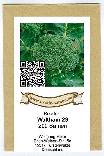 Broccoli - Brokkoli - Waltham 29-200 Samen