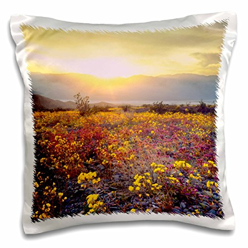 Danita Delimont - Flowers - USA, California, Wildflowers in Death Valley National Park. - 16x16 inch Pillow Case (pc_207783_1)