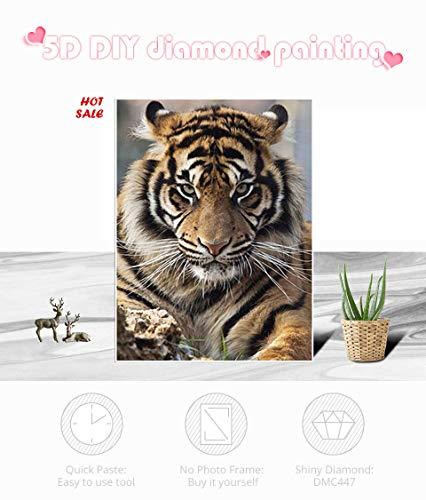 SiJXZSH Diamant stickerei 5d diy diamant malerei tiger voll platz/runde bohrer mosaik malerei kreuzstich dekoration,Square Drill 50x70cm