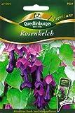 Rosenkelch, Purpurglöckchen, Rhodochiton atrosanguineus, ca. 5 Samen