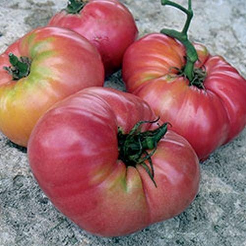 """Ungarische Samen Tomate""""Beafsteak XXL"""" extra gross und knackig, von unserer ungarischen Farm samenfest, nur organische Dünger, KEINE Pesztizide"""