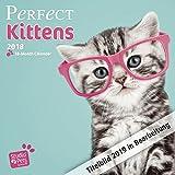 Perfect Kittens - Katzenbabies - Katzenkinder 2019 - 18-Monatskalender (Myrna-Kalender)