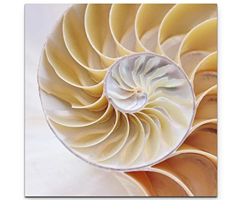 Paul Sinus Art Leinwandbilder   Bilder Leinwand 60x60cm Nautilus Muschel (Bilder Muschel)