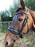 BAX Equine arrotolato briglia a morso snodato Full size nero