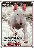 Petsigns Warnschild vom weissen Bullterrier - Hundeschild aus stabiler 1,5 mm Metallplatte - TOP, DIN A5
