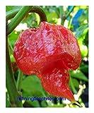 Chili Trinidad Scorpion Butch T Strain - Chili - 5 Samen
