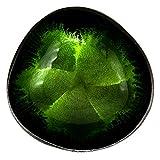 Cocovibes Kokosnuss Schale | Buddha Bowl | Dekoschale - Lackiert, Handgemacht und Umweltfreundlich (Grün) - 2