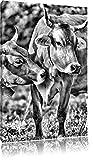 Monocrome, Kühe auf der Weide, Format: 100x70 auf Leinwand, XXL riesige Bilder fertig gerahmt mit Keilrahmen, Kunstdruck auf Wandbild mit Rahmen, günstiger als Gemälde oder Ölbild, kein Poster oder Plakat